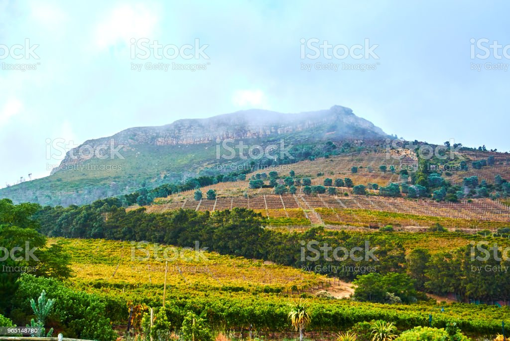 Vineyards in Constantia Cape-Town royalty-free stock photo