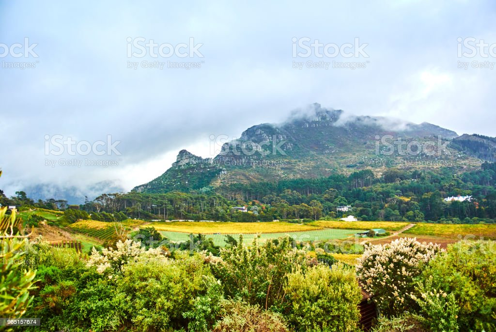 Vineyards in Constantia Cape-Town zbiór zdjęć royalty-free