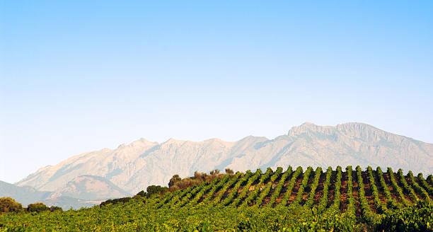 Vignobles en Corse island - Photo