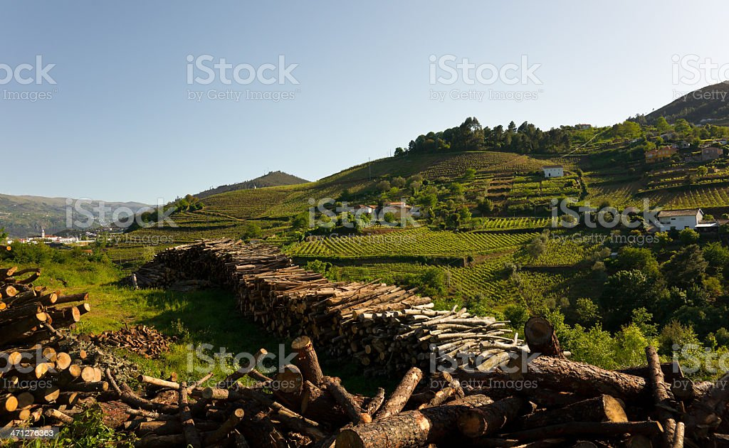 Vineyards in Douro River Valley, Portugal royalty-free stock photo