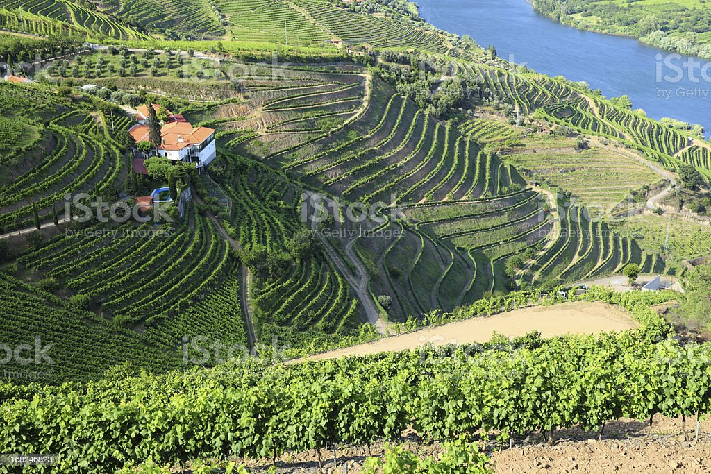 Vineyards in Douro Valley stock photo