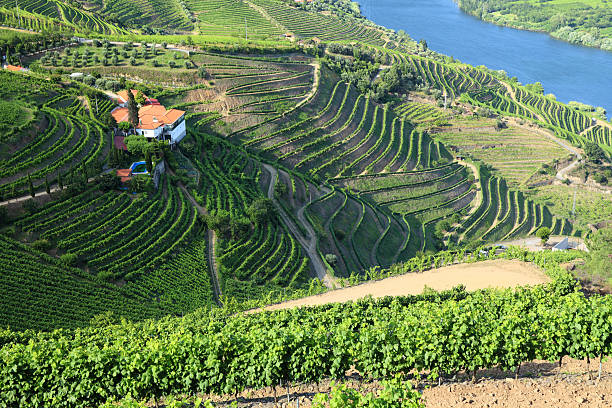 Vineyards in Douro Valley Vineyards in Douro Valley, Portugal duero stock pictures, royalty-free photos & images