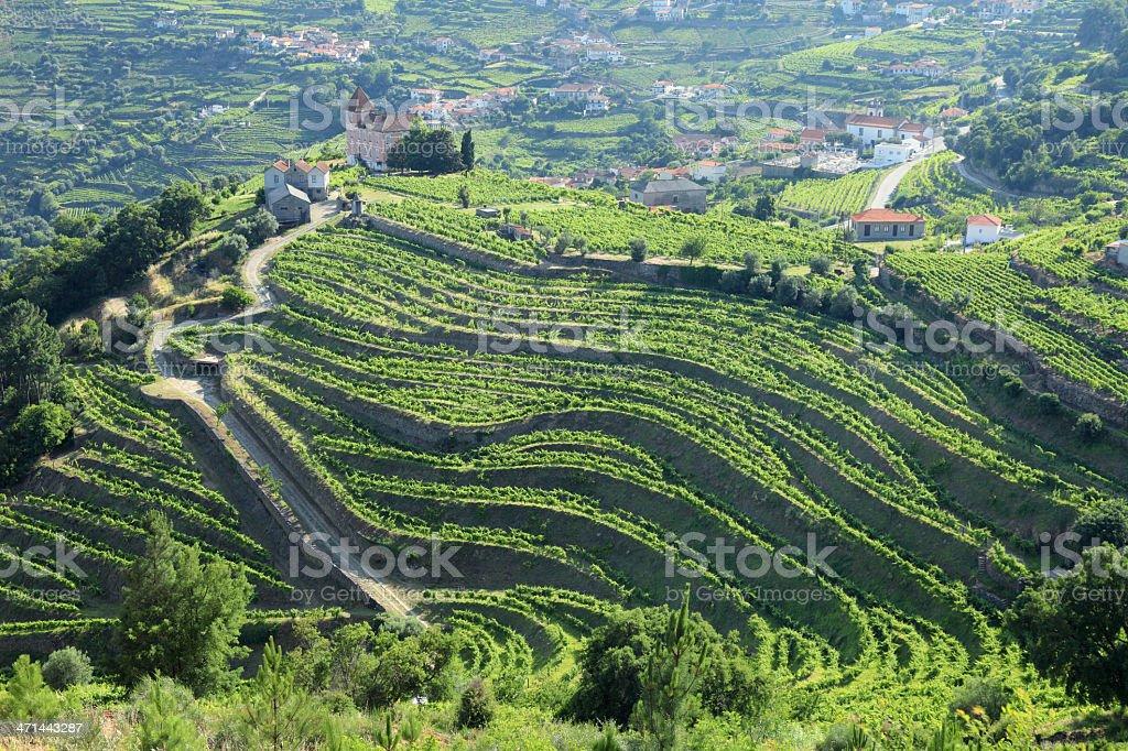 Vineyards in Douro Valley stock photo
