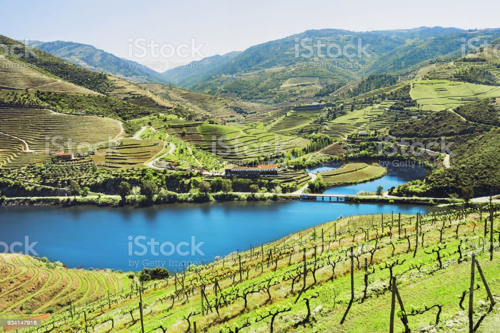 Vineyards in Douro valley, Portugal stock photo