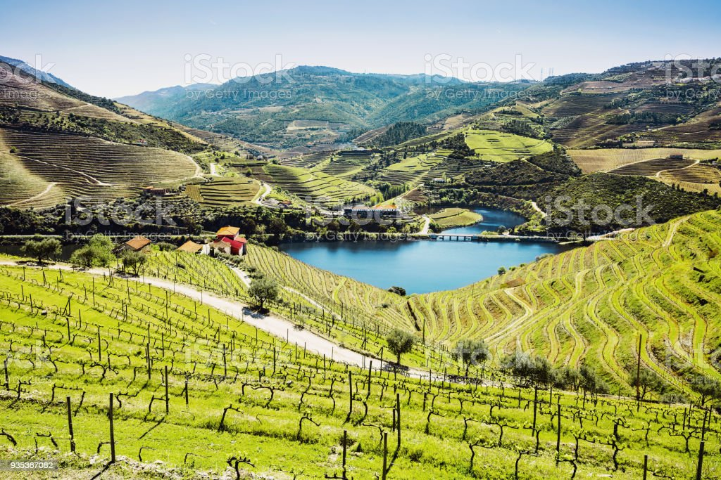 Vineyards in Douro valley with river, Portugal stock photo