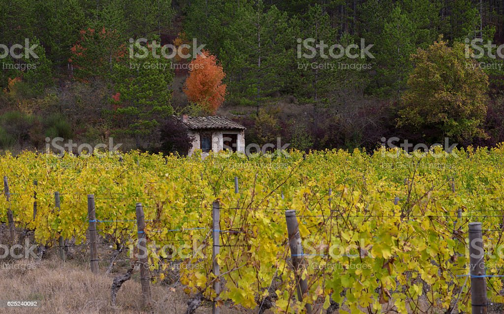 Vineyards in french countryside, Drome, Clairette de Die stock photo