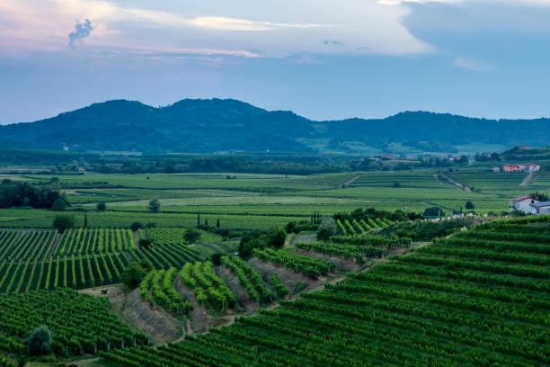 Vineyards in Goriska Brda - Slovenia's wine region stock photo