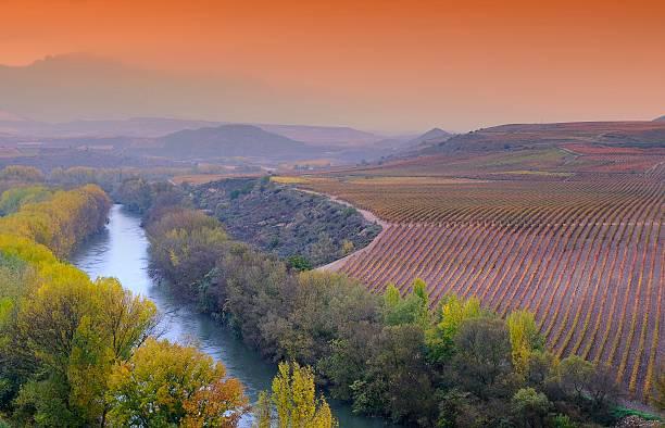 Winnice w La Rioja, Hiszpania. – zdjęcie