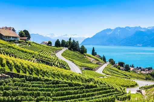 Vineyards in Lavaux region - Terrasses de Lavaux terraces, Switz