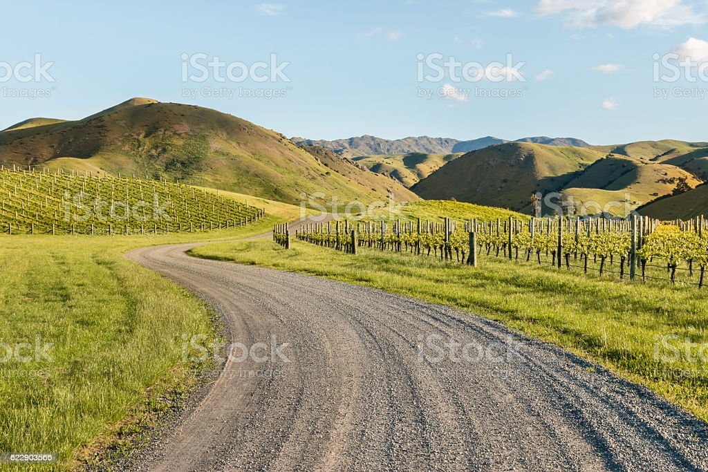 vineyards in Marlborough, New Zealand in springtime stock photo