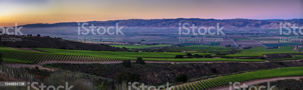 Vineyards in Monterey County at Sunset - Aerial Panoama stock photo