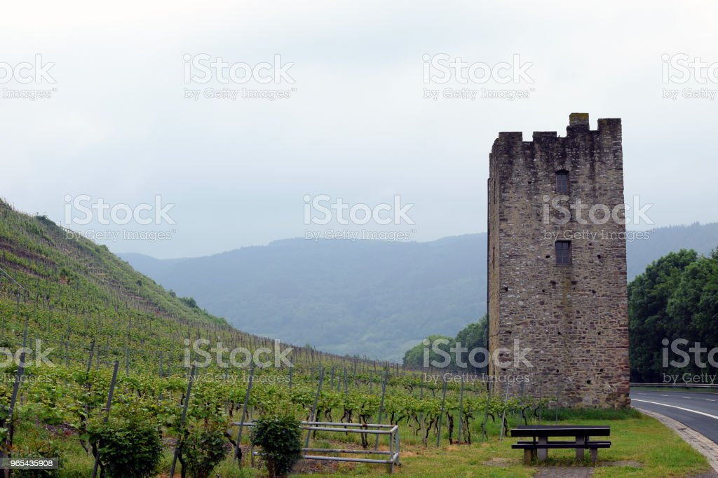 Vineyards in Moselle Valley, Germany. royalty-free stock photo