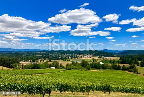 Vineyards in the Southern Willamette Valley of Oregon.