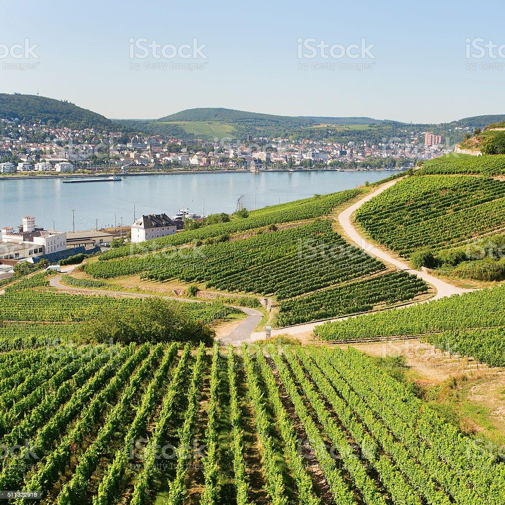 Vineyards in Rudesheim am Rhein stock photo