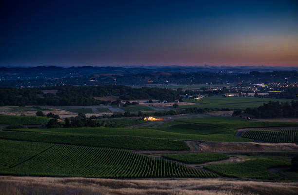 Vineyards in Sonoma County at Twilight stock photo