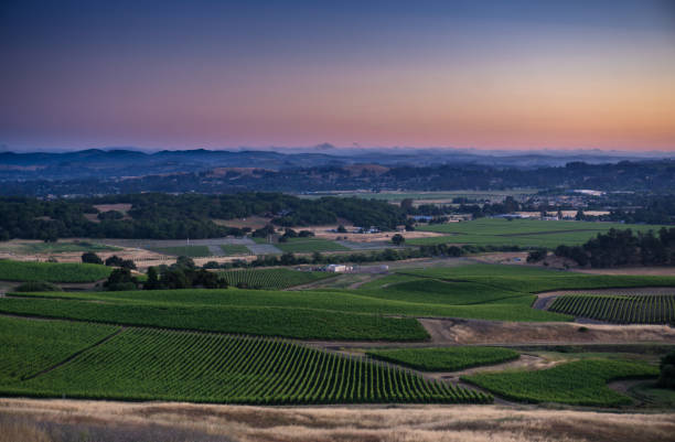 Vineyards in Sonoma County Beneath Peachy Sky stock photo