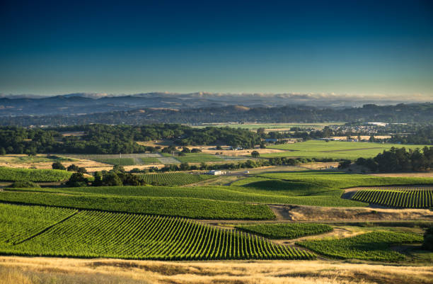 Vineyards in Sonoma County stock photo