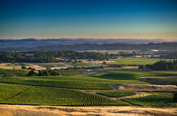 Vineyards in Sonoma County with Cloud Covered Hills stock photo