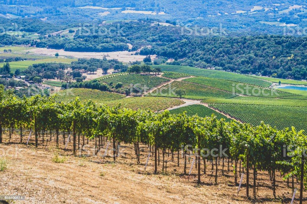 Vineyards in Sonoma stock photo