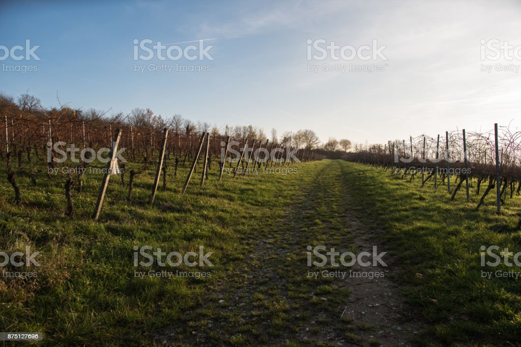 vineyards in sout west germany at autumn stock photo