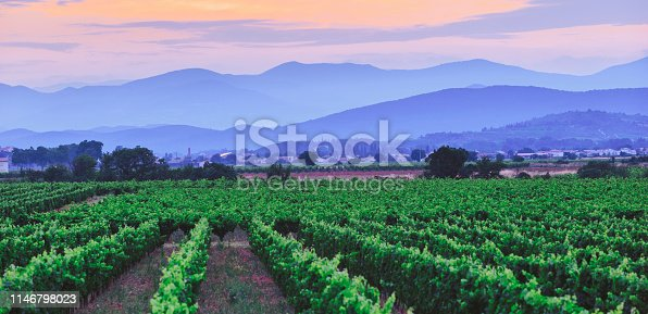 Vineyards in south of France languedoc roussillon