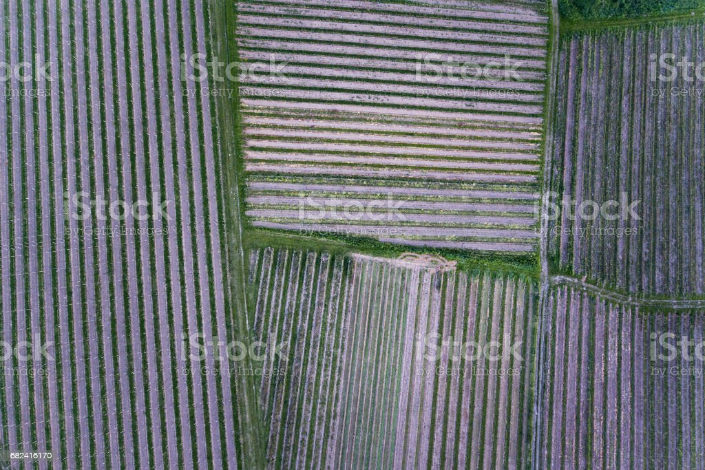 Vineyards in spring - aerial view royalty-free stock photo