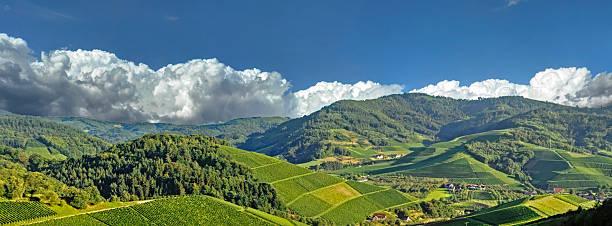 vineyards im sommer - sommerferien baden württemberg stock-fotos und bilder