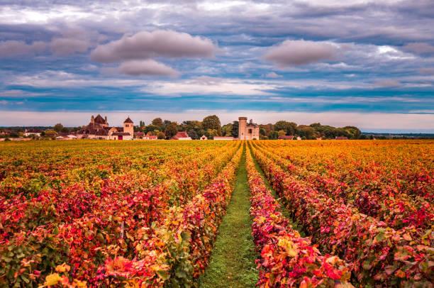 vignobles en automne, bourgogne, france - france photos et images de collection