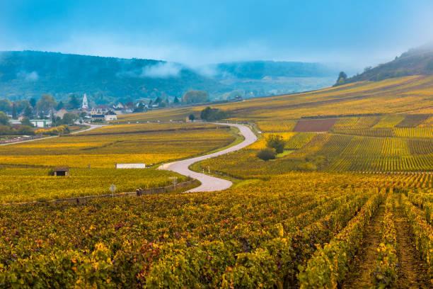 Vignobles dans la saison d'automne, Bourgogne, France - Photo