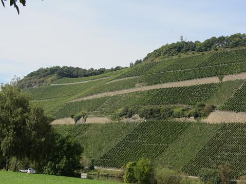 Vineyards in the Bernkasteel, Germany