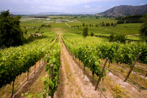 Vineyards in the Colchagua Valley - Chile - South America stock photo