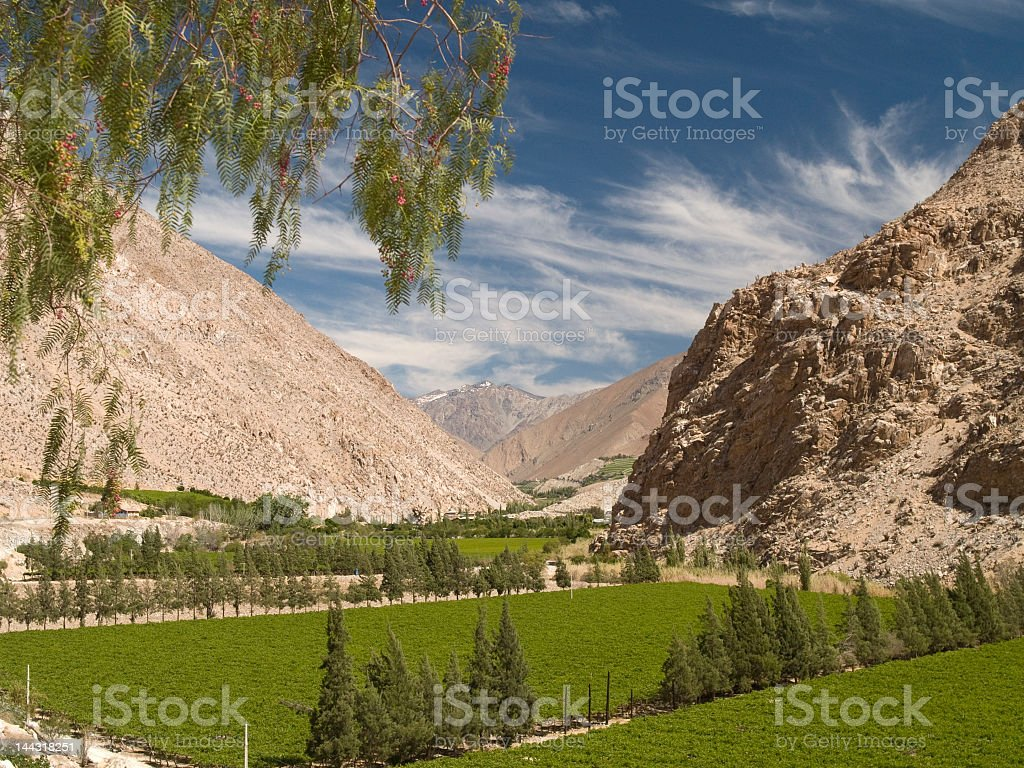 Vineyards in the Elqui Valley and mountains in spring stock photo