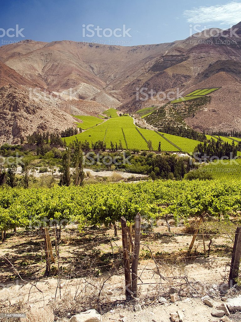 Vineyards in the Elqui Valley, Chile stock photo