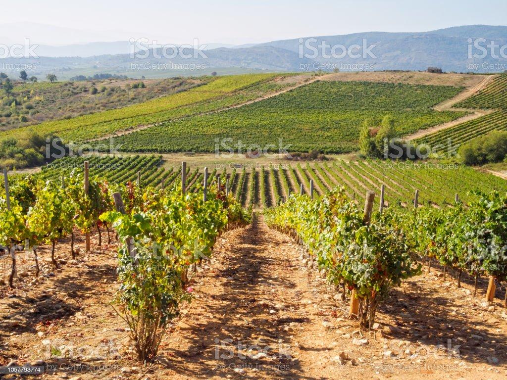 Vineyards in the harvest season - Villafranca del Bierzo stock photo