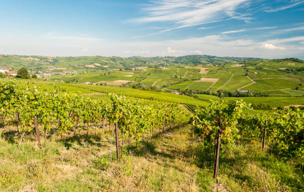 Vineyards in the hills of Oltrepo' Pavese, near Pavia stock photo