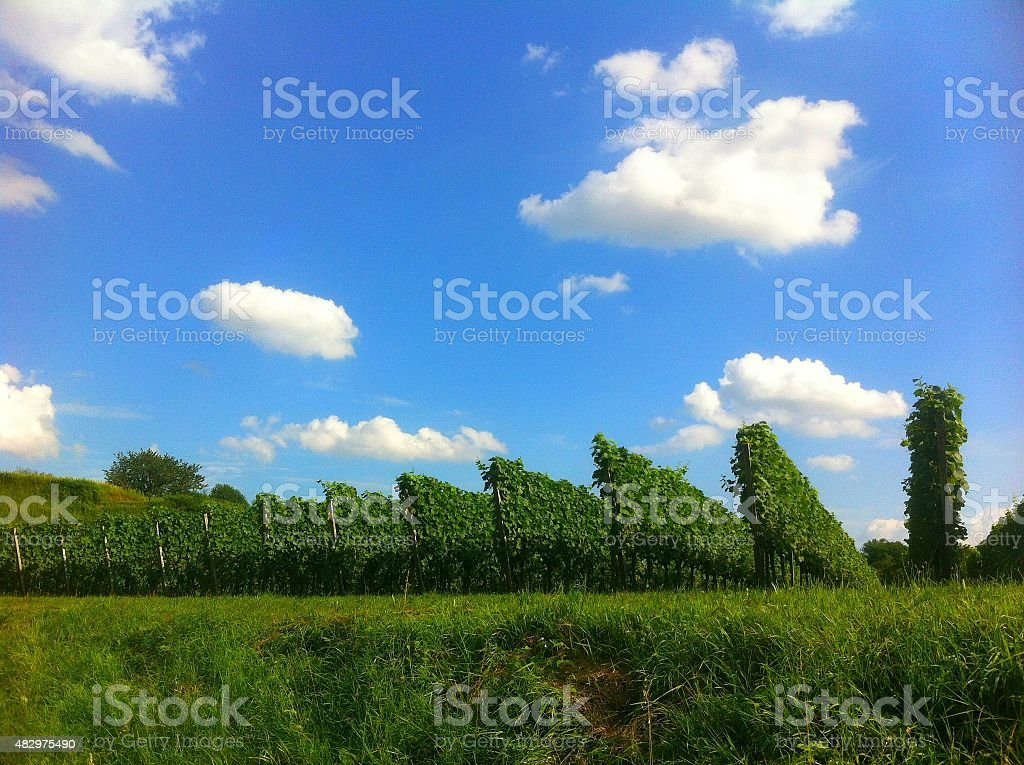Weinberge im Kaiserstuhl stock photo