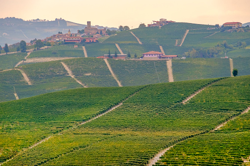 948424058 istock photo Vineyards in the Langhe, a hilly area mostly based on vine cultivation and well known for the production of Barolo wine. Province of Cuneo, Piedmont, Italy 948420590