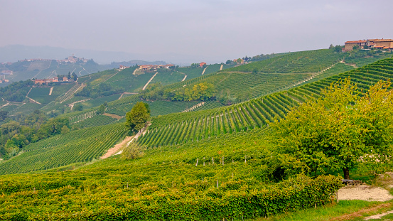948424058 istock photo Vineyards in the Langhe, a hilly area mostly based on vine cultivation and well known for the production of Barolo wine. Province of Cuneo, Piedmont, Italy 948425290