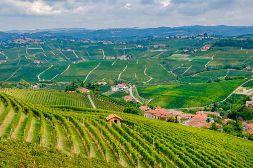 948424058 istock photo Vineyards in the Langhe, a hilly area mostly based on vine cultivation and well known for the production of Barolo wine. Province of Cuneo, Piedmont, Italy 948426300