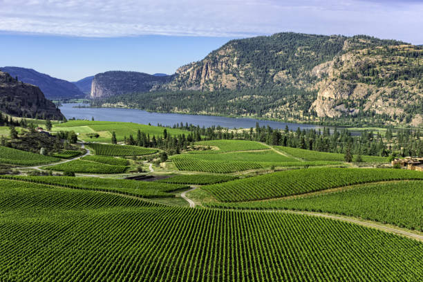 vineyards in the south okanagan near pentiction british columbia canada with vaseux lake in the background - british columbia stock pictures, royalty-free photos & images