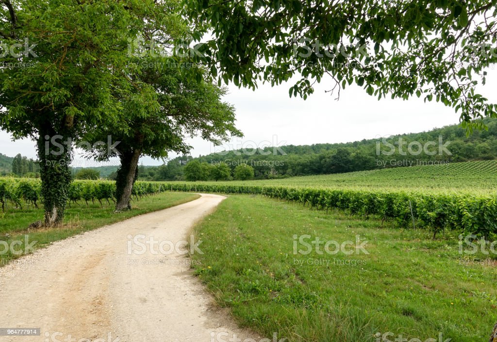 Vineyards in the south west of France in Le Lot's region royalty-free stock photo