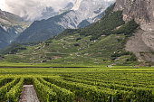 Vineyards near Sion in the Rhone Valley (Valais Canton, Switzerland).
