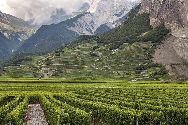 weinberge in der kanton wallis - kanton schweiz stock-fotos und bilder