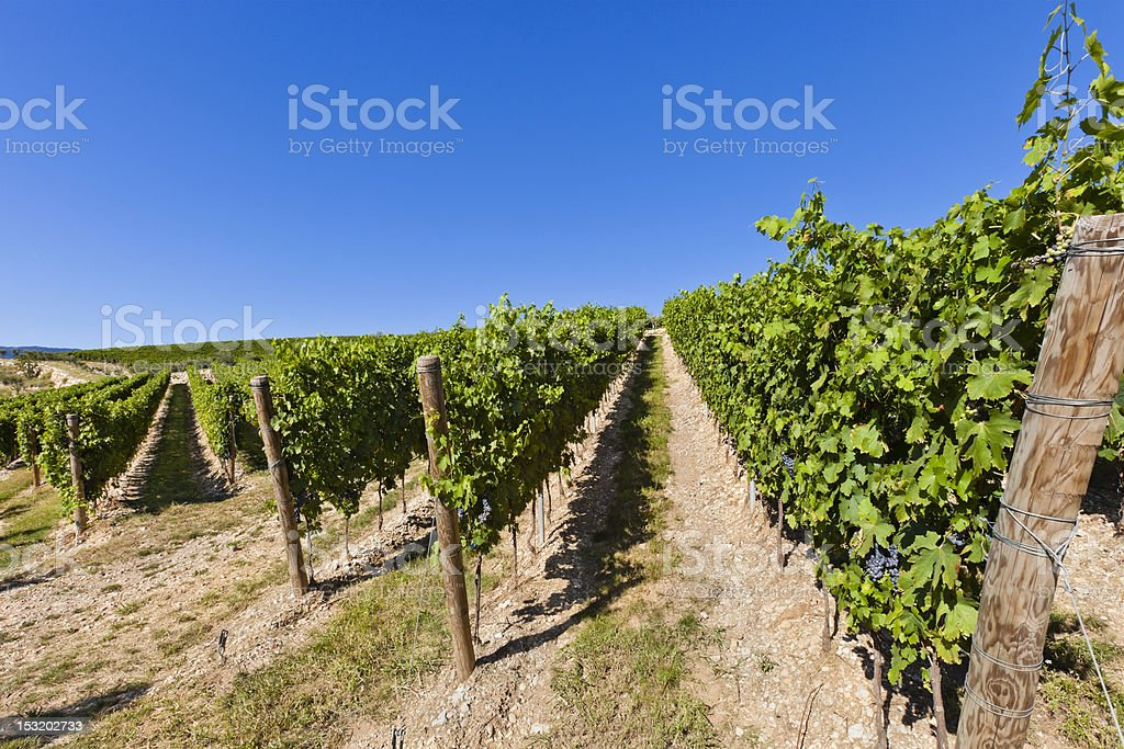 Vineyards in Valpolicella, Italy royalty-free stock photo