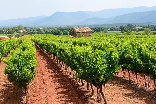 Vineyards in Var (Provence) Landscape with vineyard in Var (Provence-Alpes-Cote d'Azur, France) at summer var stock pictures, royalty-free photos & images
