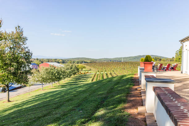 Vineyards in Virginia with people relaxing by picturesque view of winery grape rows Barboursville: Vineyards in Virginia with people relaxing by picturesque view of winery grape rows charlottesville stock pictures, royalty-free photos & images