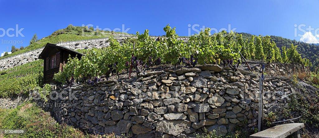 Vineyards in Visperterminen, Switzerland - highest vineyards in Europe stock photo