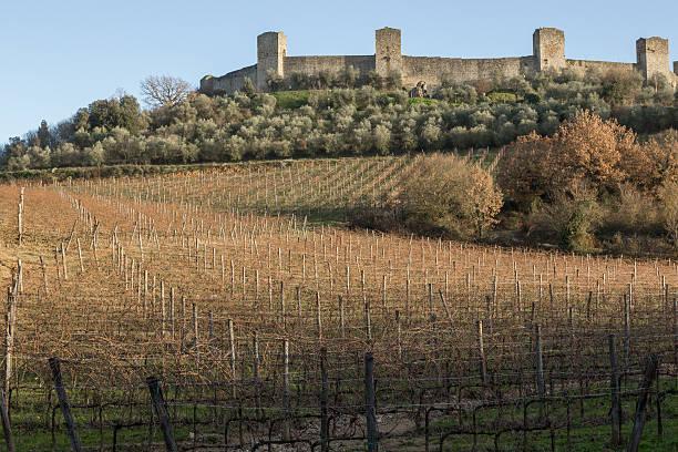 Vineyards in winter close to monteriggioni, Tuscany, Italy stock photo
