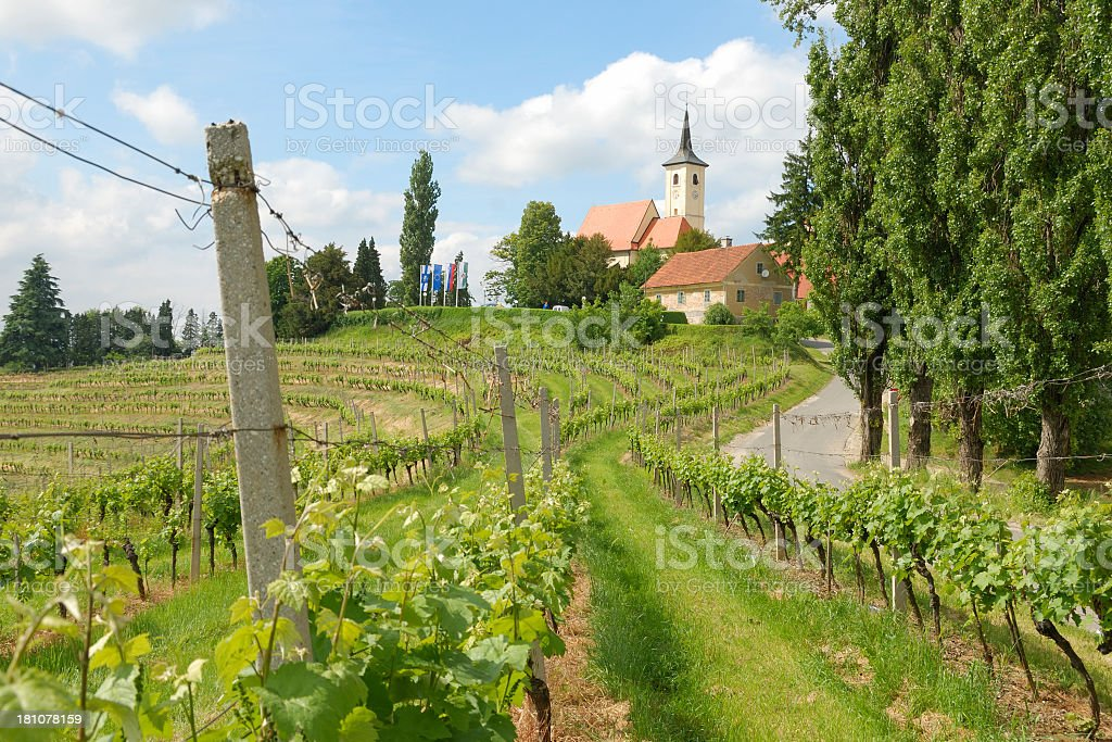 Vineyards, Jeruzalem royalty-free stock photo