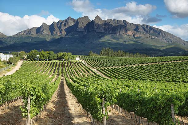 Vineyards landscape near Wellington Vineyards landscape near Wellington, South Africa south africa stock pictures, royalty-free photos & images